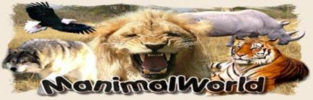Logo_Manimalworld